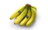 Bananes | Fairtrade | Bio